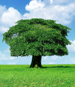 Tree Care Services in New Jersey